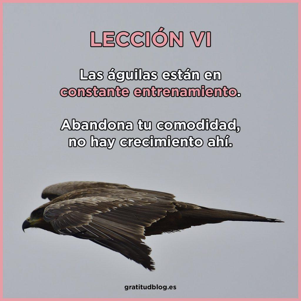 6º Consejo del Águila - Las águilas están en constante entrenamiento.