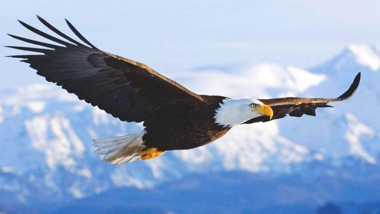 Lecciones del águila