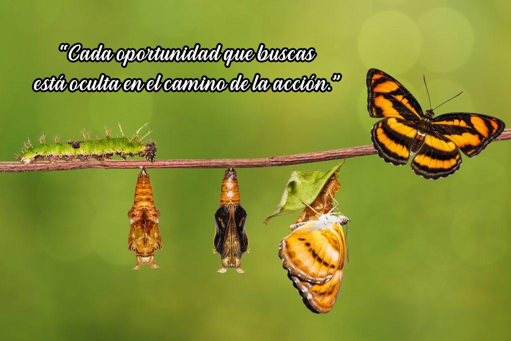 Ciclo de la mariposa, tenemos que cambiar