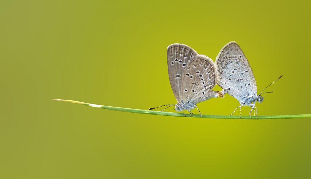 El cambio de la mariposa