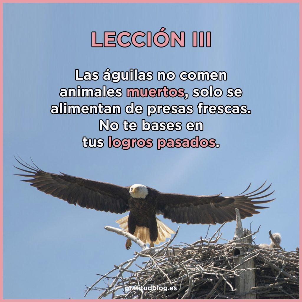 3º Consejo del Águila - Las águilas no comen animales muertos, solo se alimentan de presas frescas.