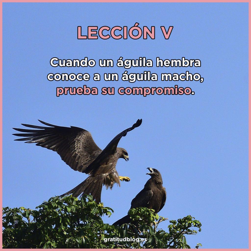 5º Consejo del águila - Cuando un águila hembra conoce a un águila macho, prueba su compromiso.